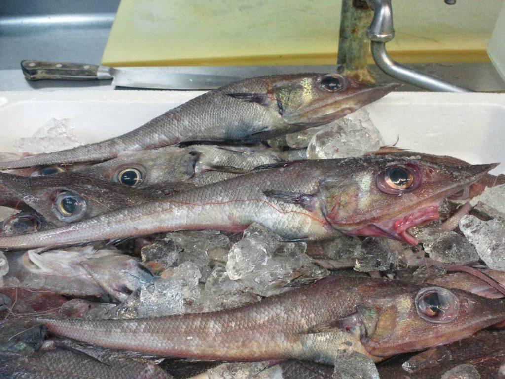 沼津港 深海魚
