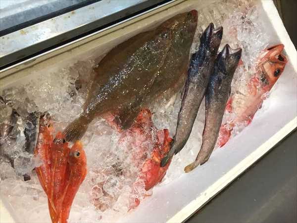かもめ丸 深海魚 トロール
