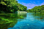 柿田川湧水公園初心者が見落とす「八つ橋」