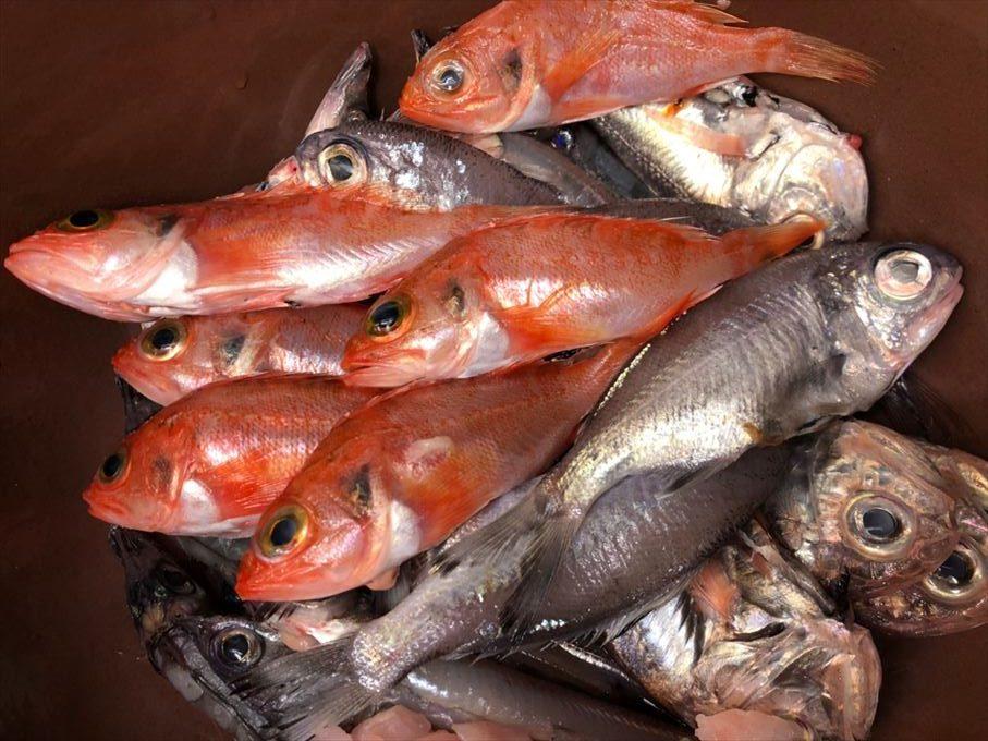 沼津港 深海魚料理 汁 煮付 揚げ物